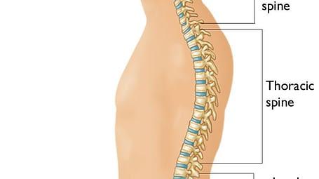 Spine Segments